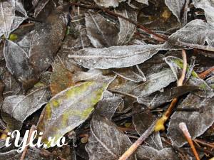 herfts bladeren met een beetje vorst